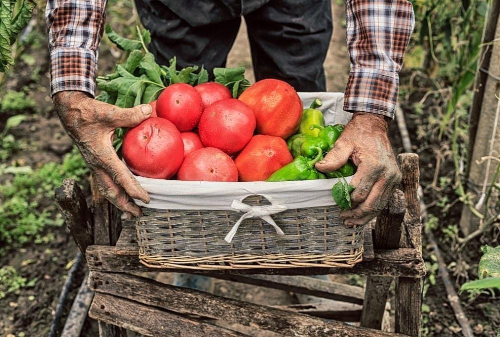 جمع آوری گیاهان و حمل آن ها