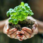 پرورش گیاهان دارویی و رعایت نکات لازم در پرورش آن ها