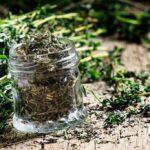 خشک کردن گیاهان دارویی