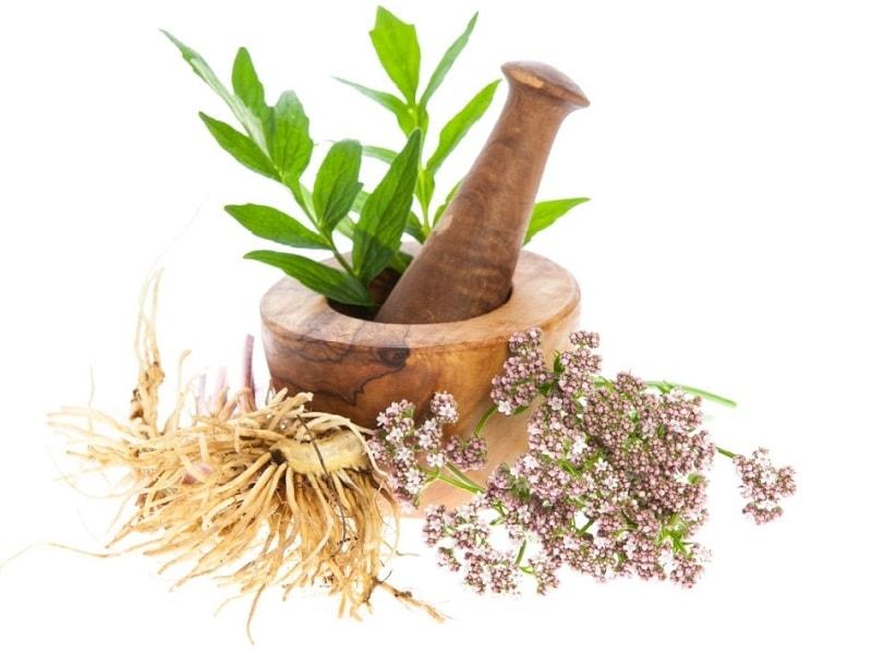 فراورده های ریشه سنبل الطیب به عنوان یک داروی کمکی