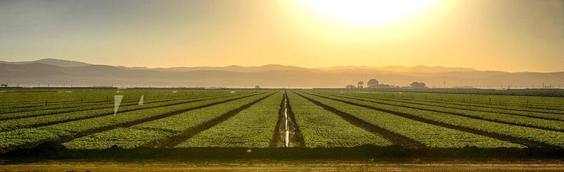 تاثیرات استفاده نکردن از گرده افشانی بر کشاورزی