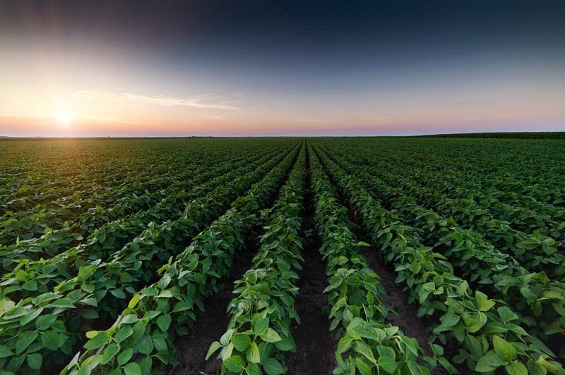 تاثیر گرده افشانی بر زمین کشاورزی