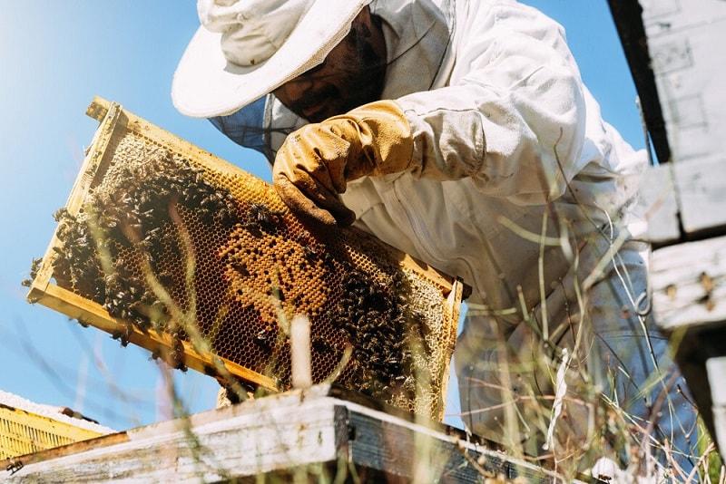 تاثیر زنبورداری بر کشاورزی