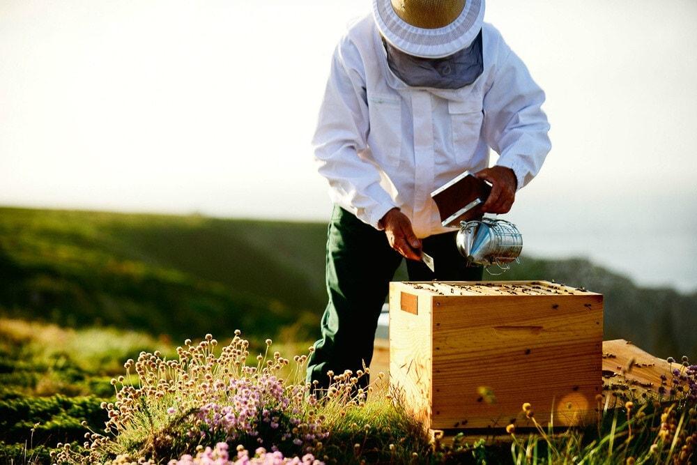 مزایا و منافع زنبورداری