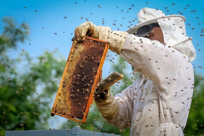 مزایای زنبورداری