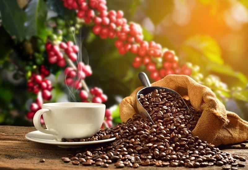 کافئیسم (Cafeisme) - به علت مصرف زیاده از حد قهوه