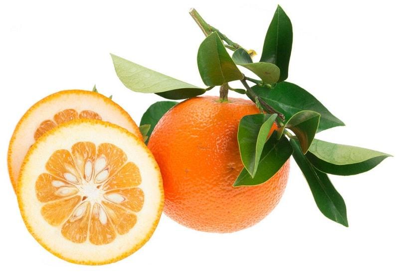 نارنج - میوه درخت نارنج