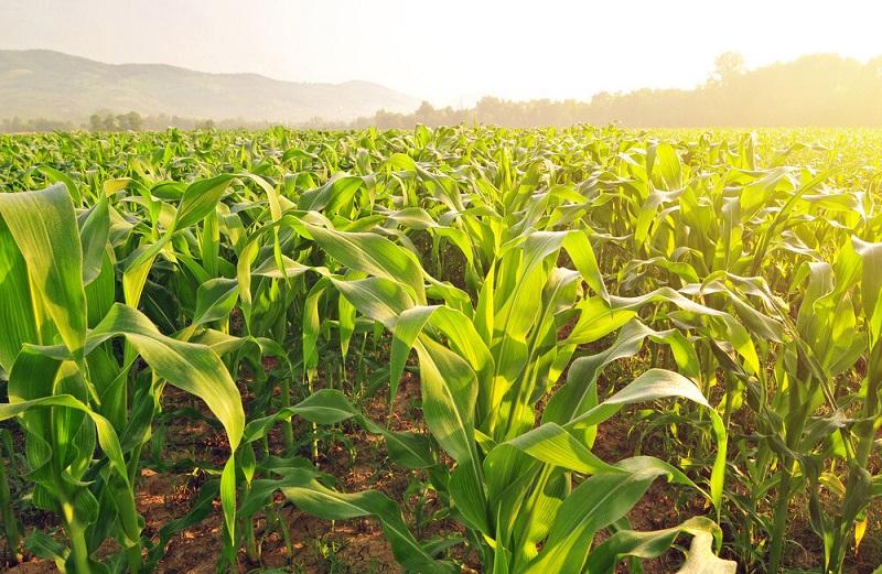 گرده افشانی بر کشاورزی