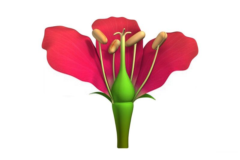 نصب تله گرده گیری برای برای جمع آوری گرده گل