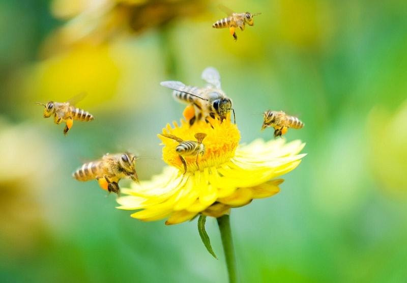 زنبور های کارگر
