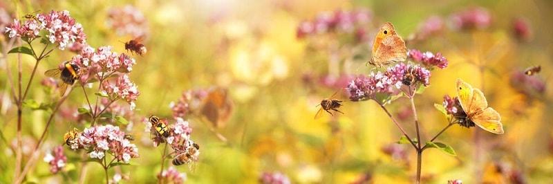 شناسایی توسط زنبور ها