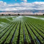 تاثیرات گرده افشانی بر کشاورزی