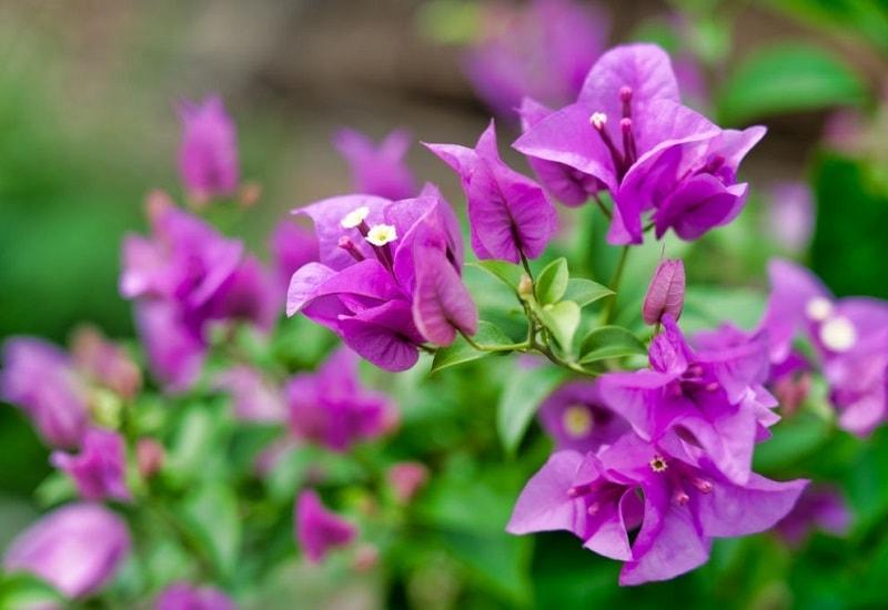 انواع زینتی و زیبا گیاهان تیره پروانه واران