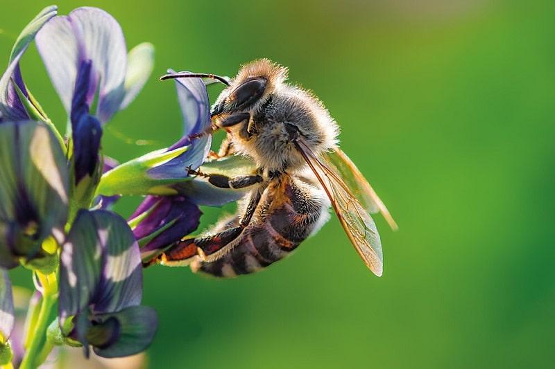 زنبور نر،زنبور کارگر، زنبور ملکه