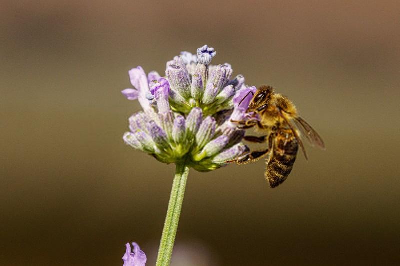 ترکیب شیمیایی انواع گرده گل