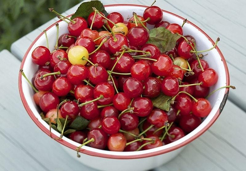میوه آلبالوی تلخ