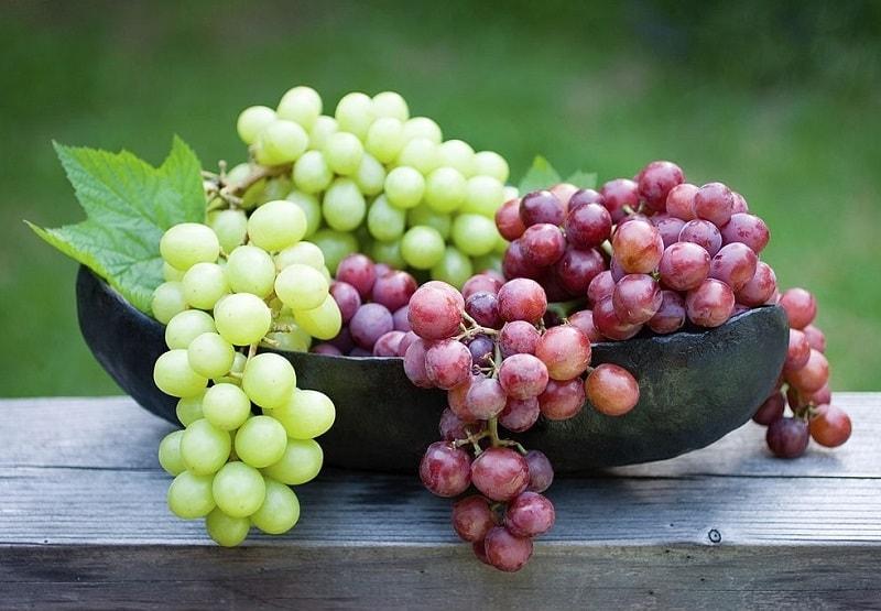 خواص درمانی درخت انگور