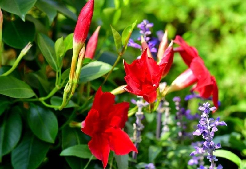 ساروروژنین موجود در ترکیبات دانه های گیاهان تیره خرزهره