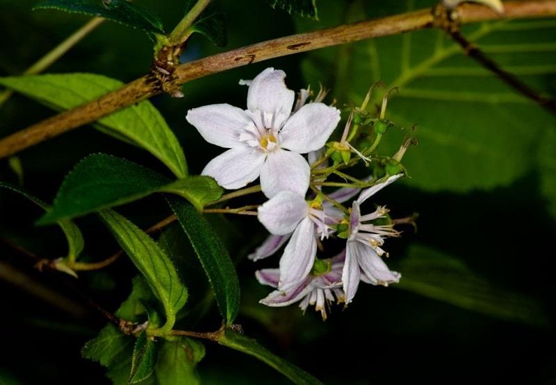 شناسایی گیاهان مختلف تیره خرزهره