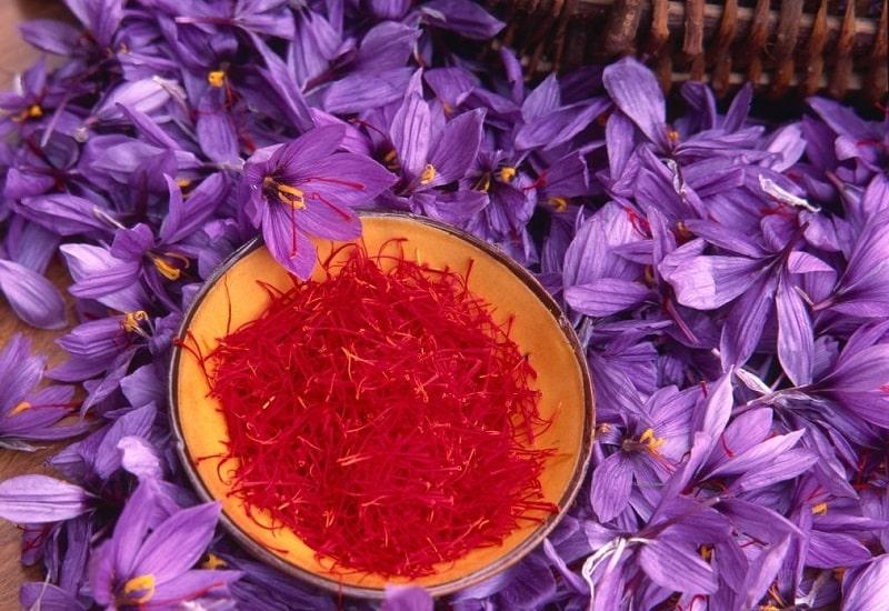 گلپوش های زعفران - گیاه شناسی زعفران