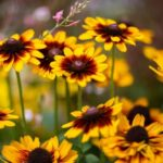 گل منظم