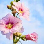 گل نر - ماده