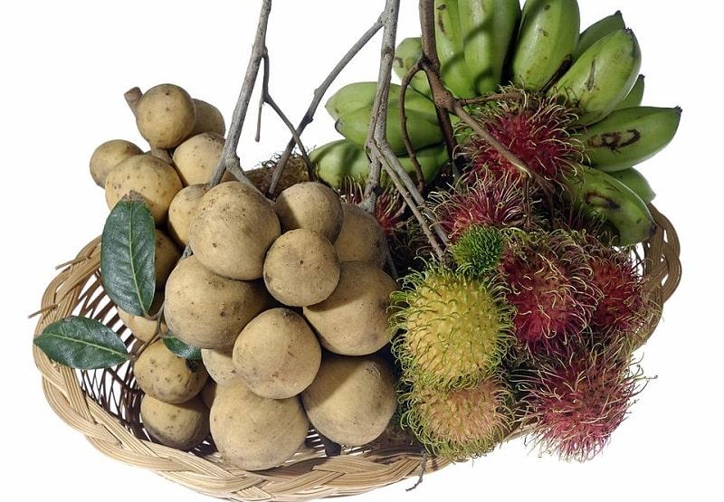 شرح مختصر چند نوع از گیاهان مفید دیگر تیره شال سنجد