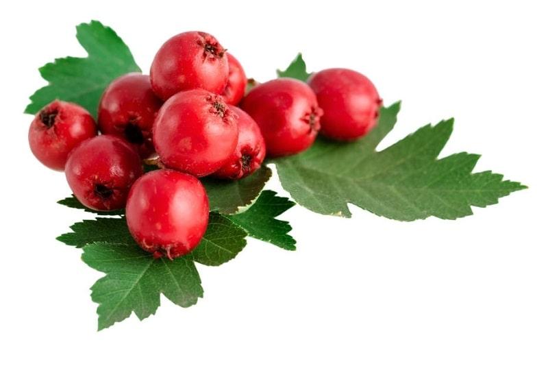 نسخه های درمانی با گیاه سرخ ولیک